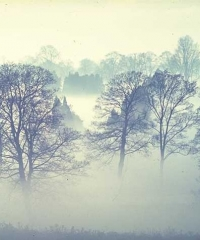 Sương mù vùng đông bắc