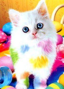 Mèo thích phomat